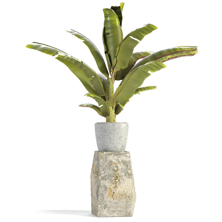 Plant in Pot Flowerpot Exotic Plant royalty-free 3d model - Preview no. 3