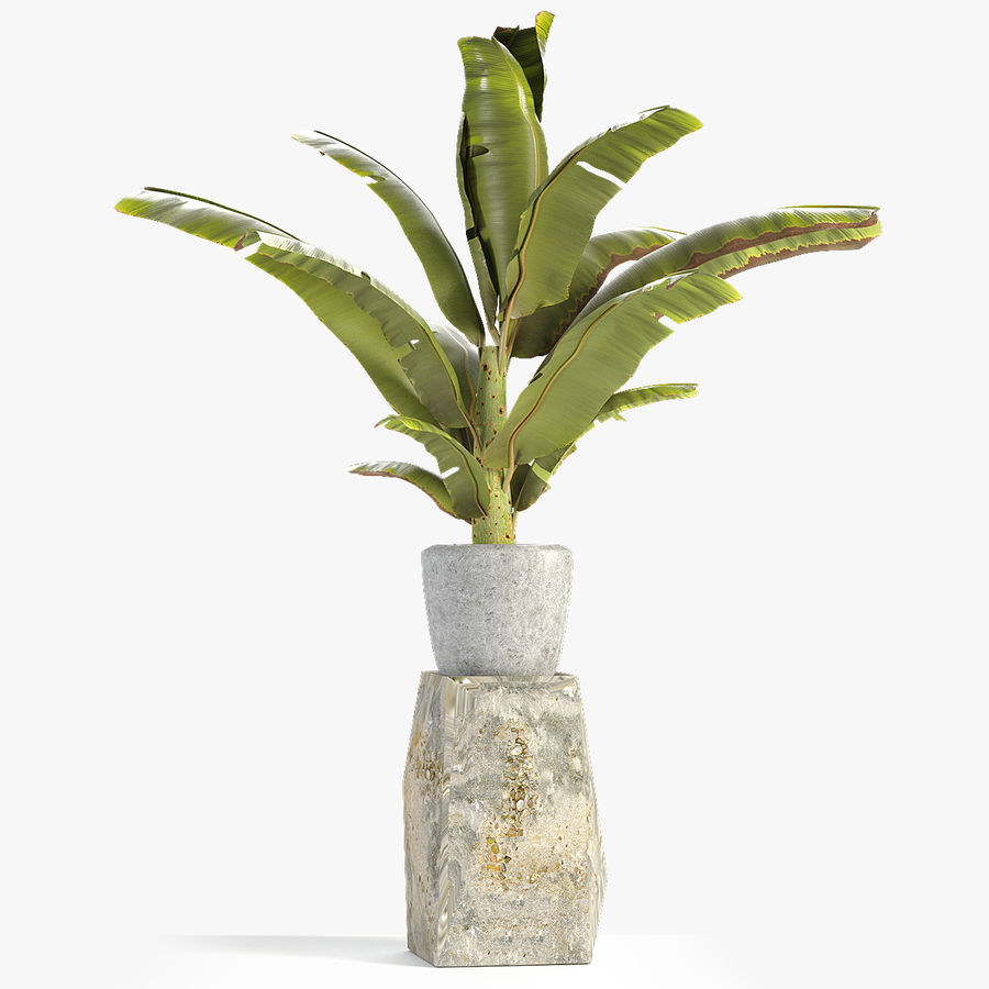 Plant in Pot Flowerpot Exotic Plant royalty-free 3d model - Preview no. 1