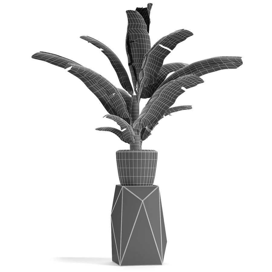 Plant in Pot Flowerpot Exotic Plant royalty-free 3d model - Preview no. 6