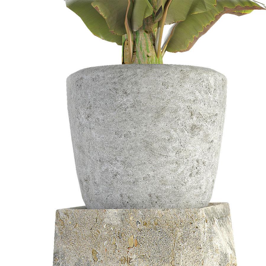 Растение в горшке Цветочный горшок Экзотическое растение royalty-free 3d model - Preview no. 5