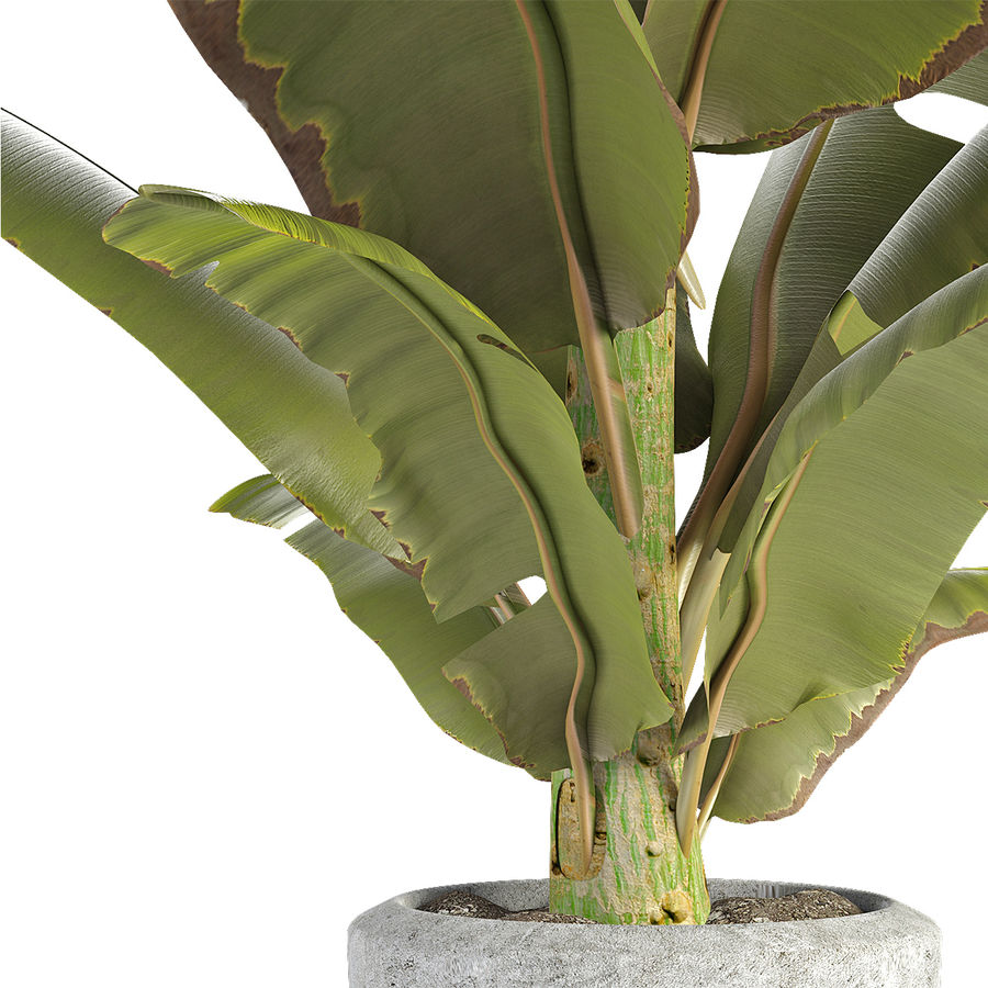 Растение в горшке Цветочный горшок Экзотическое растение royalty-free 3d model - Preview no. 4