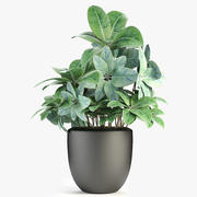 Plant in de exotische plant van de pottenbloempot 3d model