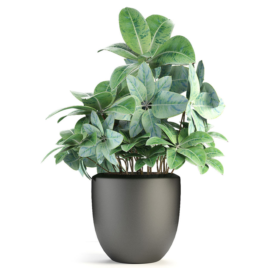 盆栽花盆中的植物异国植物 royalty-free 3d model - Preview no. 3