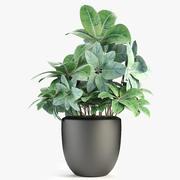 盆栽花盆中的植物异国植物 3d model