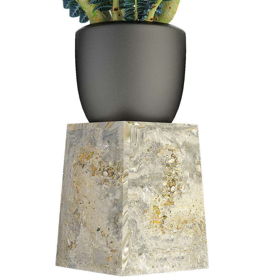 盆栽花盆中的植物异国植物 royalty-free 3d model - Preview no. 5