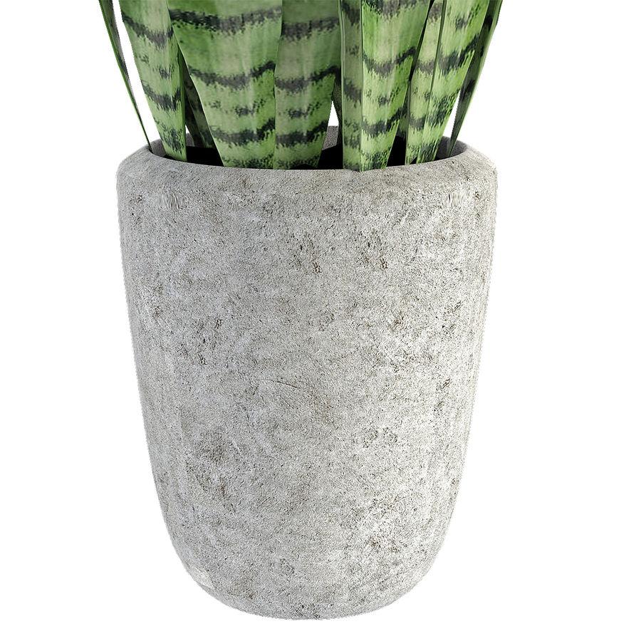 Roślina w doniczce Doniczka Roślina egzotyczna royalty-free 3d model - Preview no. 5