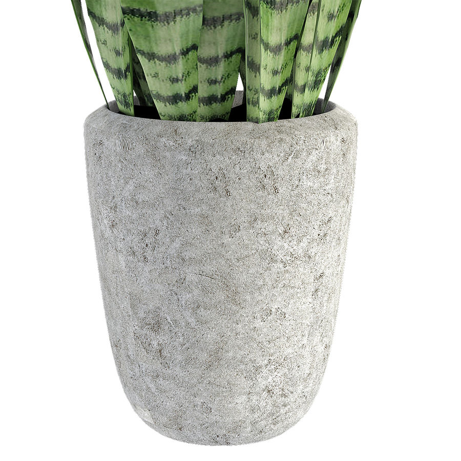Plant in de exotische plant van de pottenbloempot royalty-free 3d model - Preview no. 5