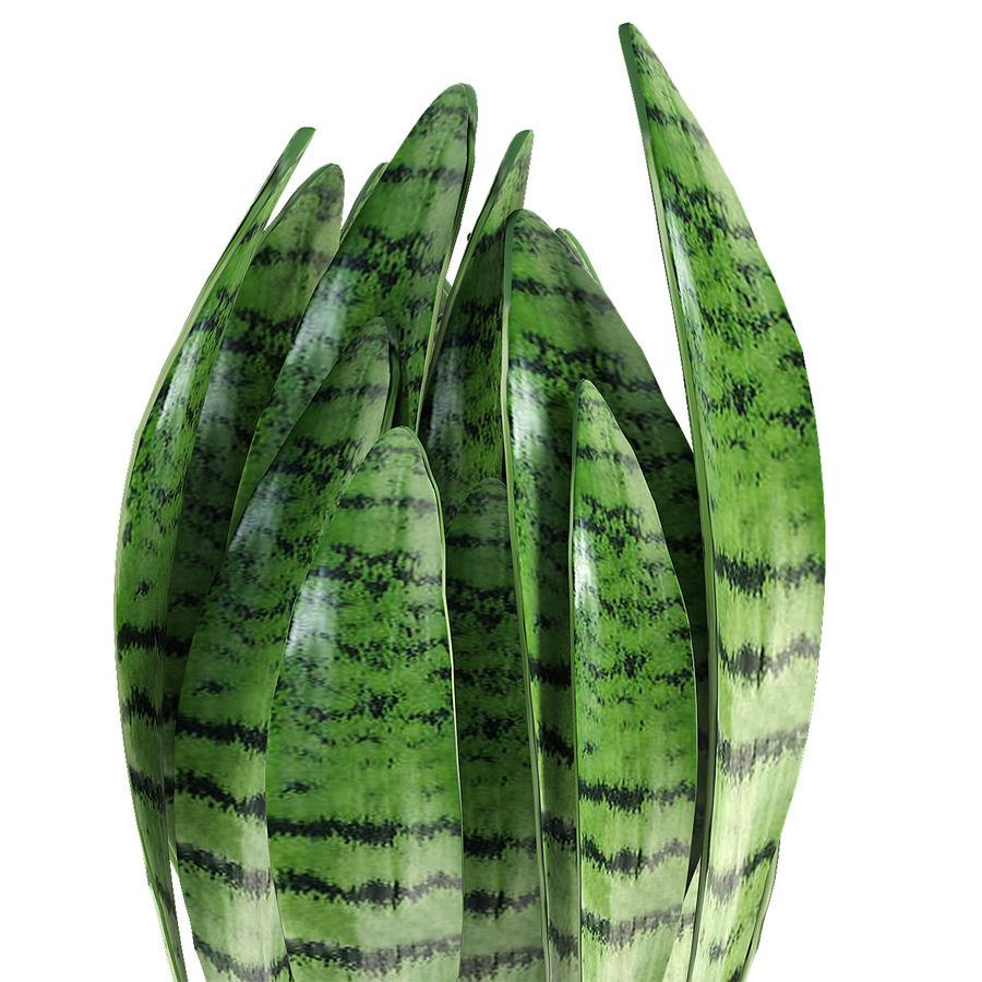 Roślina w doniczce Doniczka Roślina egzotyczna royalty-free 3d model - Preview no. 4