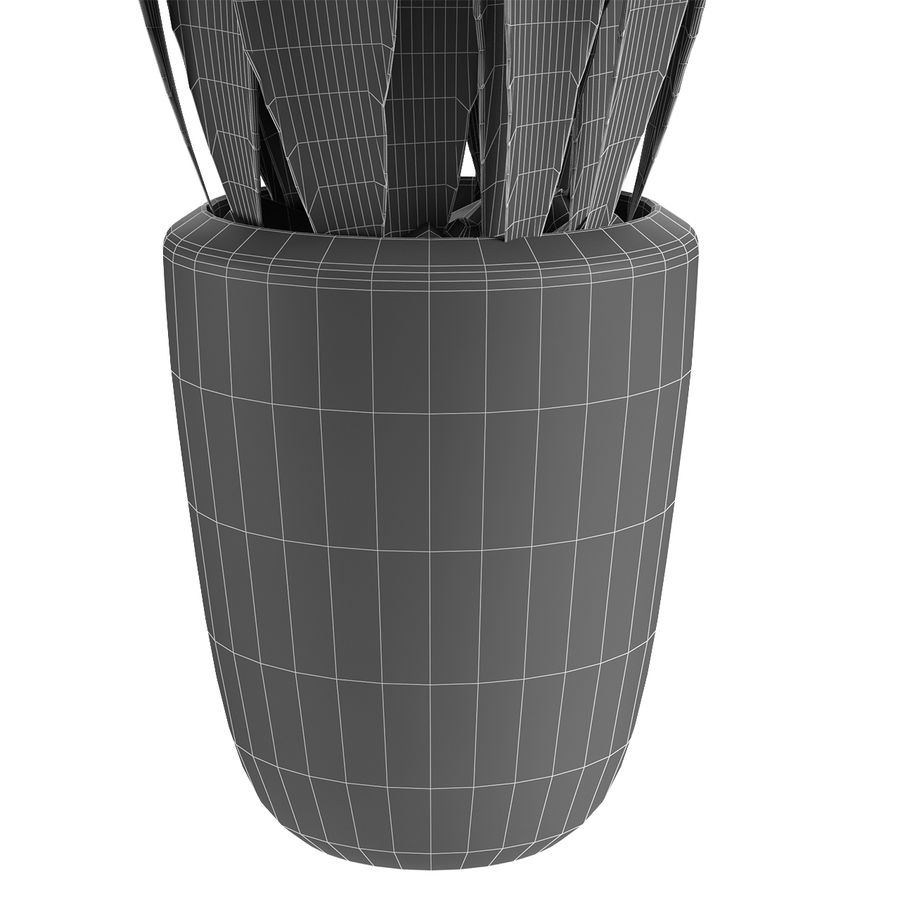 Roślina w doniczce Doniczka Roślina egzotyczna royalty-free 3d model - Preview no. 8