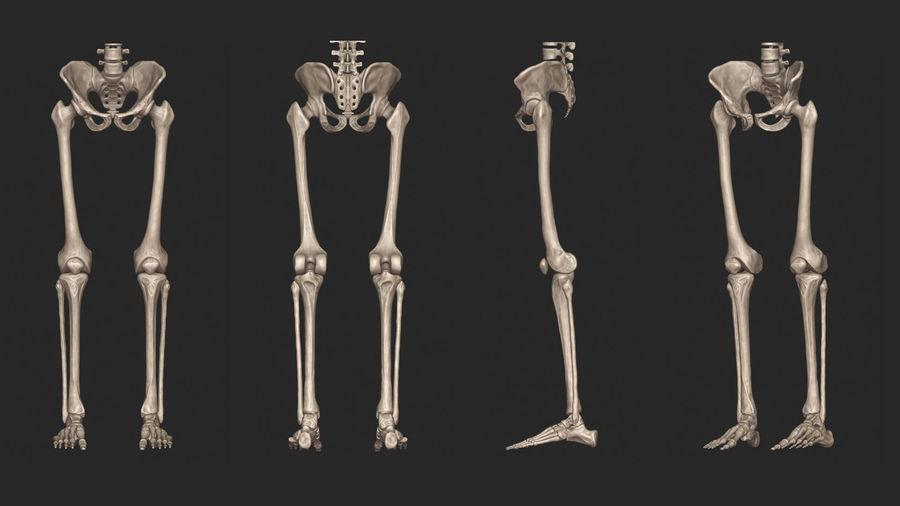 Ludzkie kości nóg (model High Poly) royalty-free 3d model - Preview no. 6