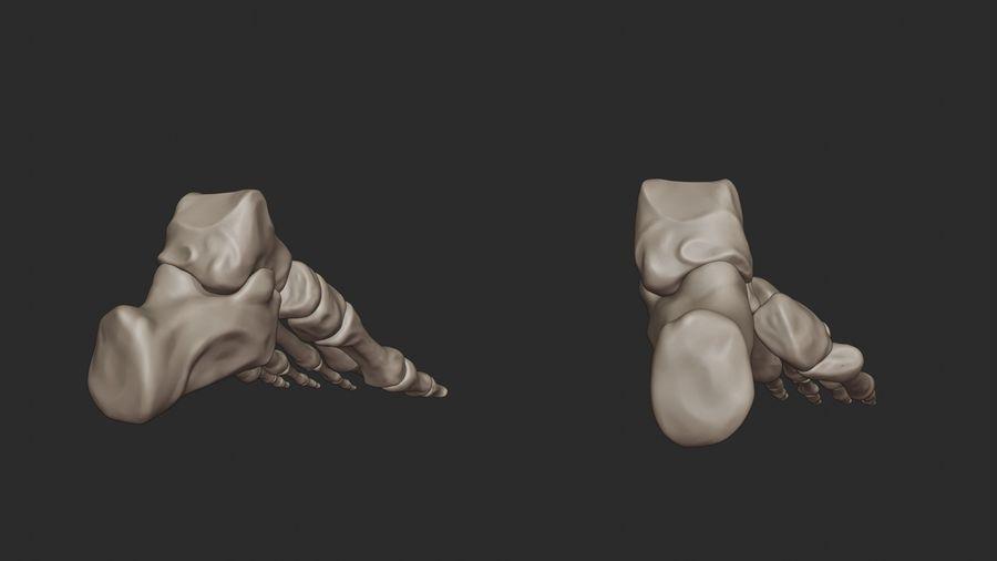 Ludzkie kości nóg (model High Poly) royalty-free 3d model - Preview no. 10