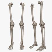 Ludzkie kości nóg (model High Poly) 3d model