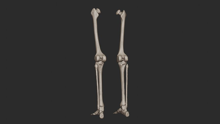 Ludzkie kości nóg (model High Poly) royalty-free 3d model - Preview no. 4