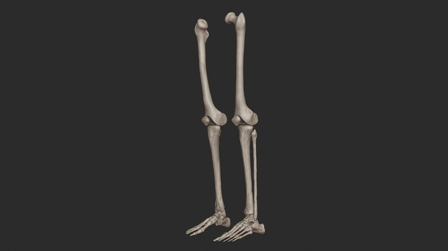 Ludzkie kości nóg (model High Poly) royalty-free 3d model - Preview no. 5