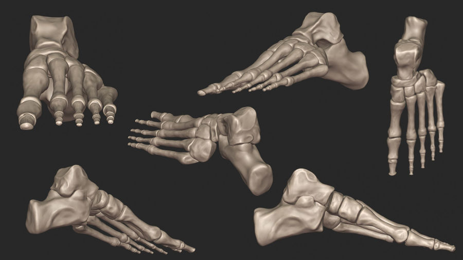 Ludzkie kości nóg (model High Poly) royalty-free 3d model - Preview no. 9