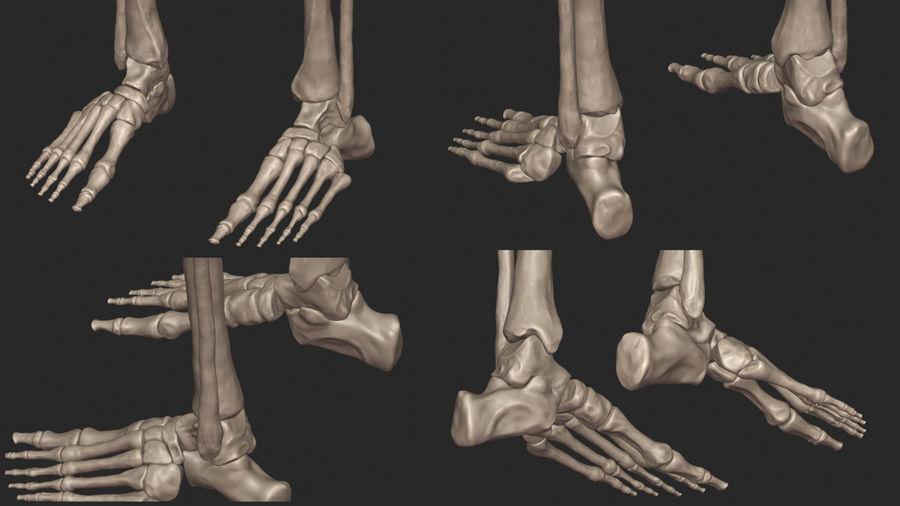 Ludzkie kości nóg (model High Poly) royalty-free 3d model - Preview no. 12