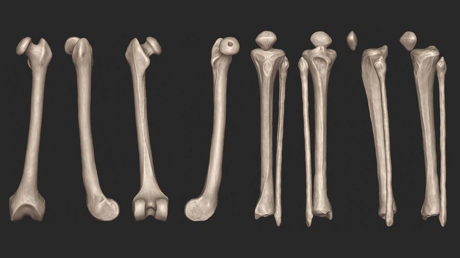 Ludzkie kości nóg (model High Poly) royalty-free 3d model - Preview no. 14