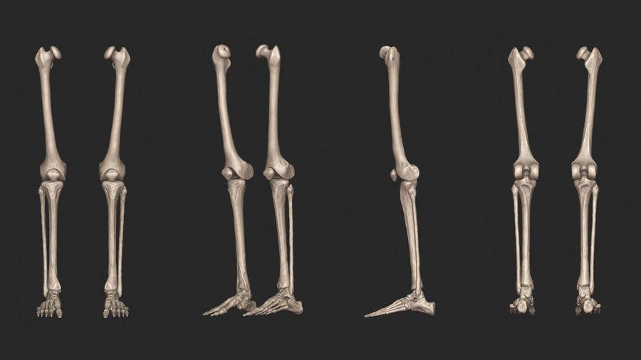 Ludzkie kości nóg (model High Poly) royalty-free 3d model - Preview no. 7