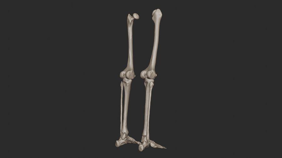 Ludzkie kości nóg (model High Poly) royalty-free 3d model - Preview no. 15