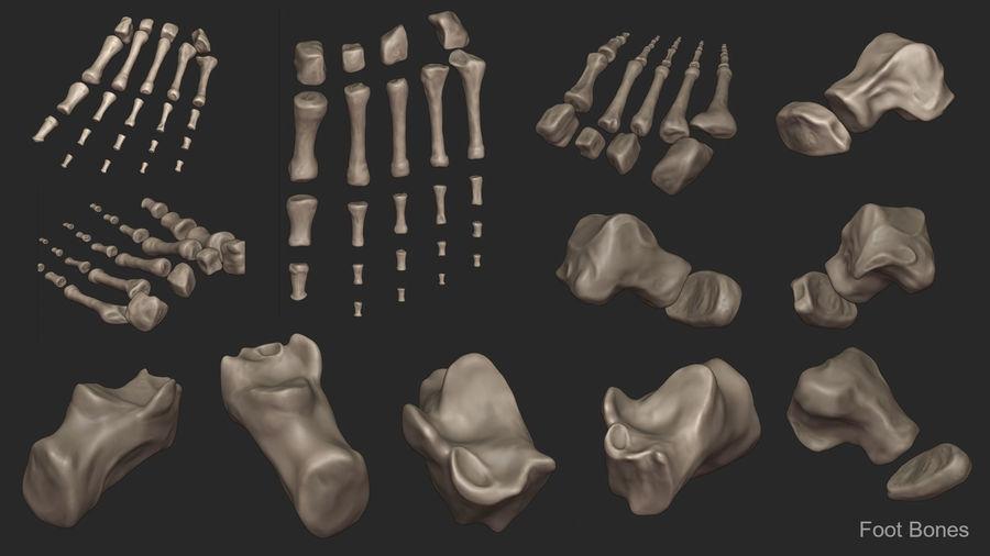 Ludzkie kości nóg (model High Poly) royalty-free 3d model - Preview no. 16