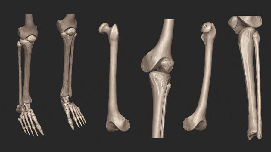 Ludzkie kości nóg (model High Poly) royalty-free 3d model - Preview no. 13
