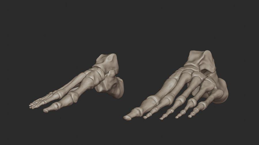 Ludzkie kości nóg (model High Poly) royalty-free 3d model - Preview no. 8