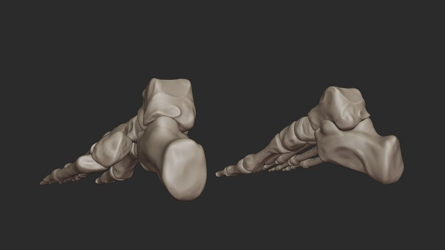 Ludzkie kości nóg (model High Poly) royalty-free 3d model - Preview no. 11