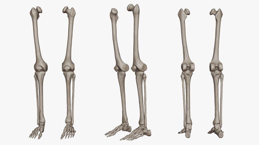 Ludzkie kości nóg (model High Poly) royalty-free 3d model - Preview no. 2