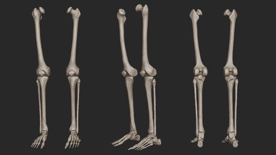 Ludzkie kości nóg (model High Poly) royalty-free 3d model - Preview no. 3