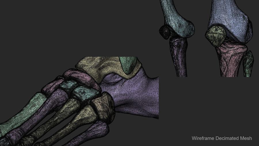 Ludzkie kości nóg (model High Poly) royalty-free 3d model - Preview no. 19