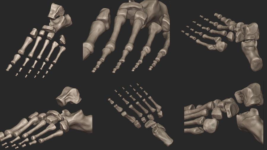 Ludzkie kości nóg (model High Poly) royalty-free 3d model - Preview no. 18