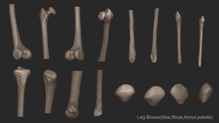 Ludzkie kości nóg (model High Poly) royalty-free 3d model - Preview no. 17