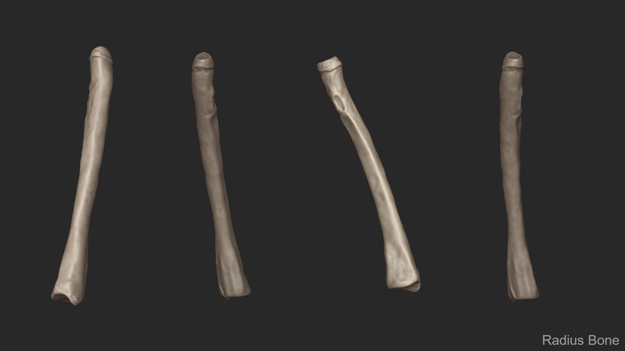 Human Arm Bones (High Poly Model) royalty-free 3d model - Preview no. 11