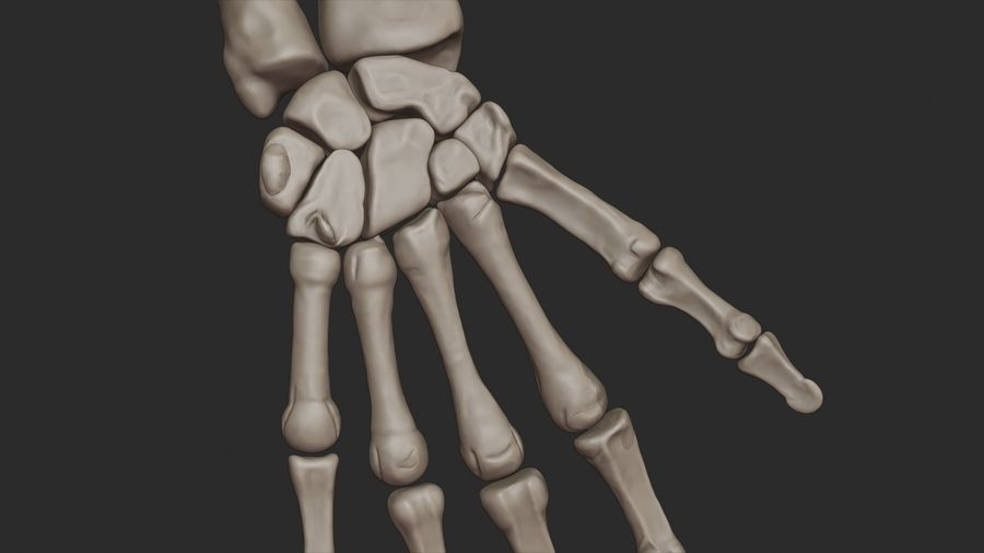 Human Arm Bones (High Poly Model) royalty-free 3d model - Preview no. 15