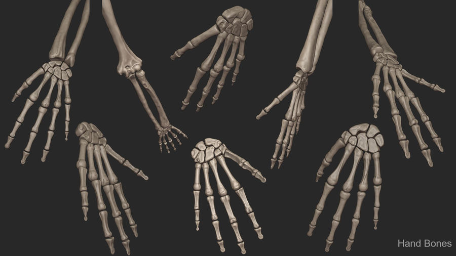 Human Arm Bones (High Poly Model) royalty-free 3d model - Preview no. 9
