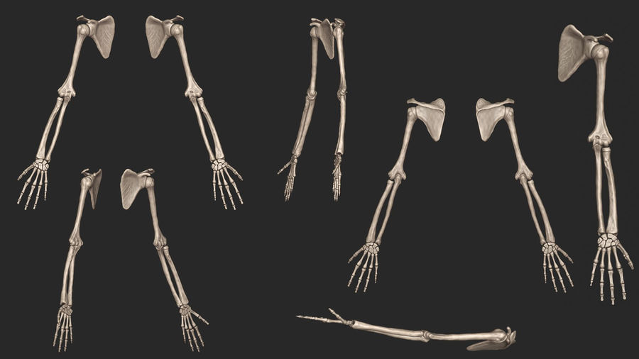 Human Arm Bones (High Poly Model) royalty-free 3d model - Preview no. 7