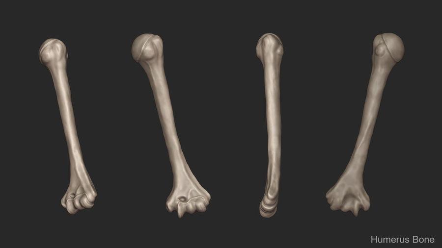 Ludzkie kości ramienia (model High Poly) royalty-free 3d model - Preview no. 10