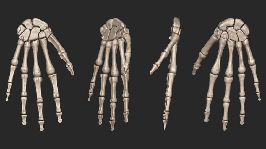 Human Arm Bones (High Poly Model) royalty-free 3d model - Preview no. 6