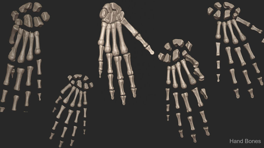Human Arm Bones (High Poly Model) royalty-free 3d model - Preview no. 14