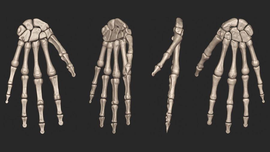 Ludzkie kości ramienia (model High Poly) royalty-free 3d model - Preview no. 6