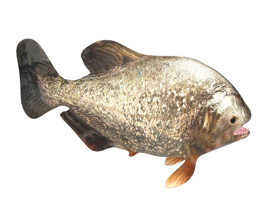 Piranha Fish Rigged royalty-free 3d model - Preview no. 8