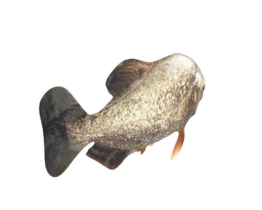 Piranha Fish Rigged royalty-free 3d model - Preview no. 7