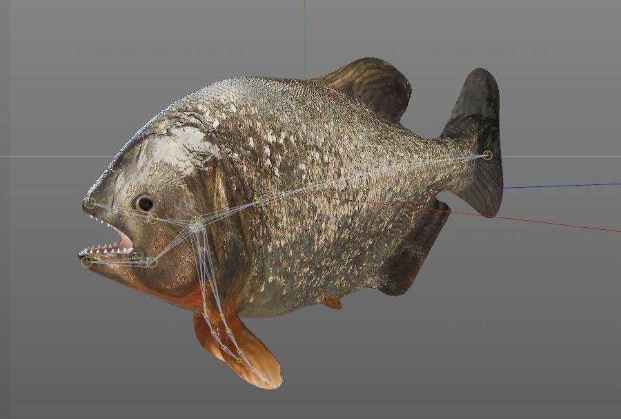 Piranha Fish Rigged royalty-free 3d model - Preview no. 12