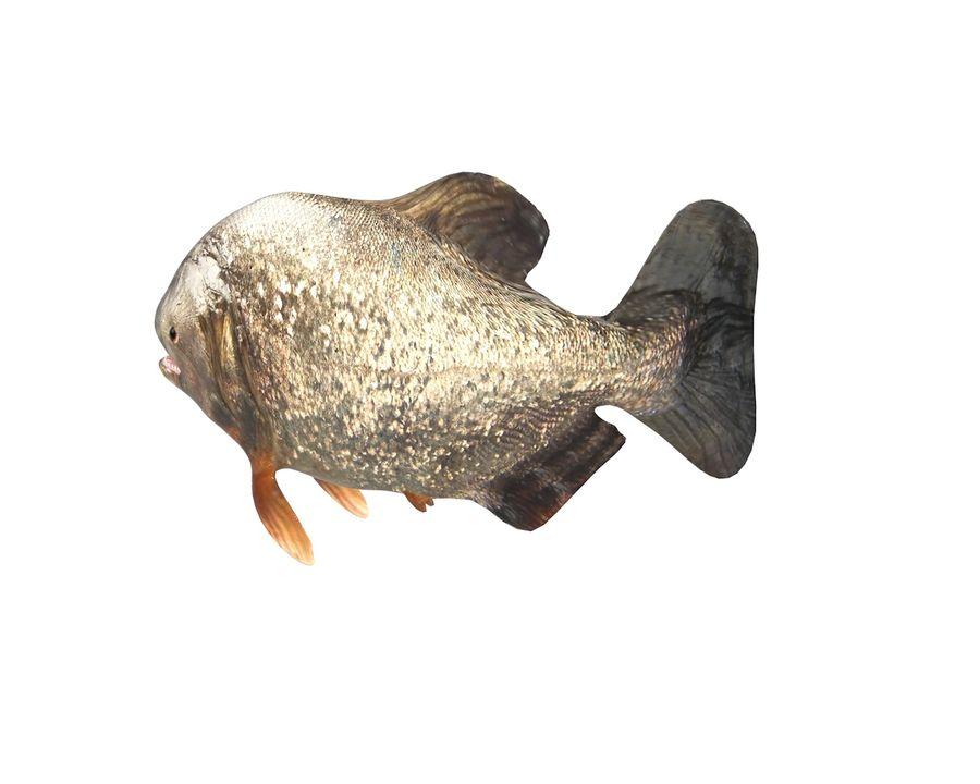 Piranha Fish Rigged royalty-free 3d model - Preview no. 4