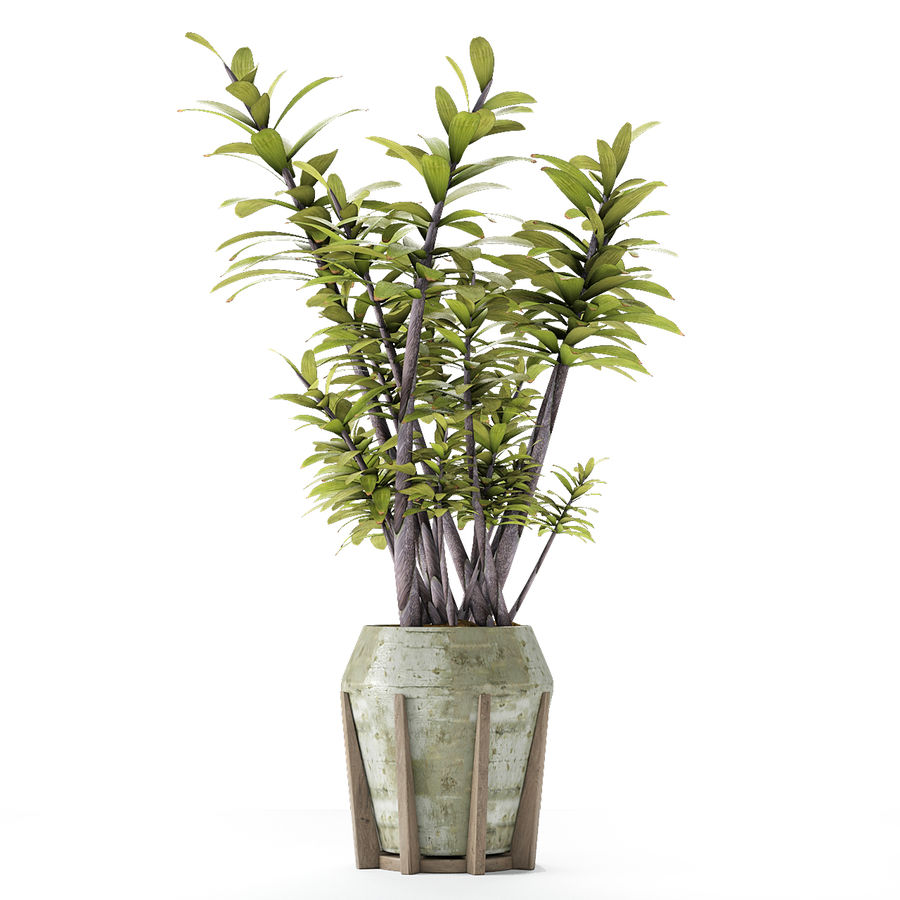 Roślina w doniczce Doniczka Roślina egzotyczna royalty-free 3d model - Preview no. 9