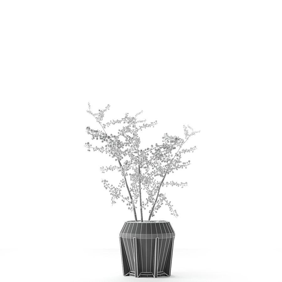 Plant in de exotische plant van de pottenbloempot royalty-free 3d model - Preview no. 8