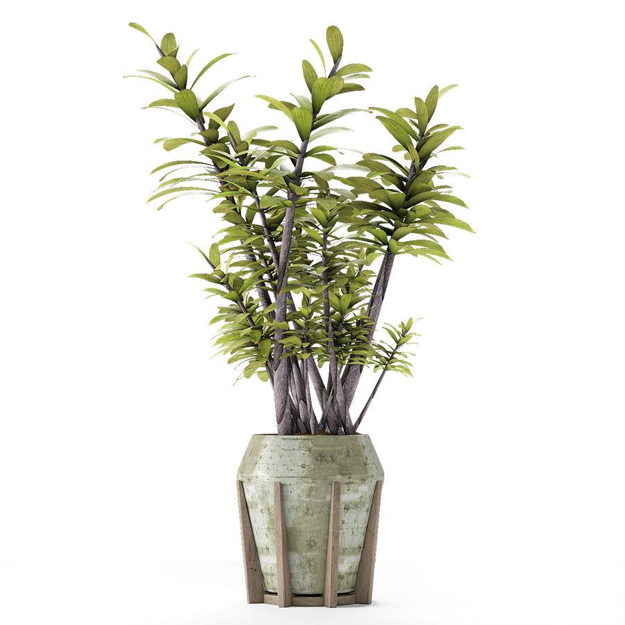 Plant in de exotische plant van de pottenbloempot royalty-free 3d model - Preview no. 9