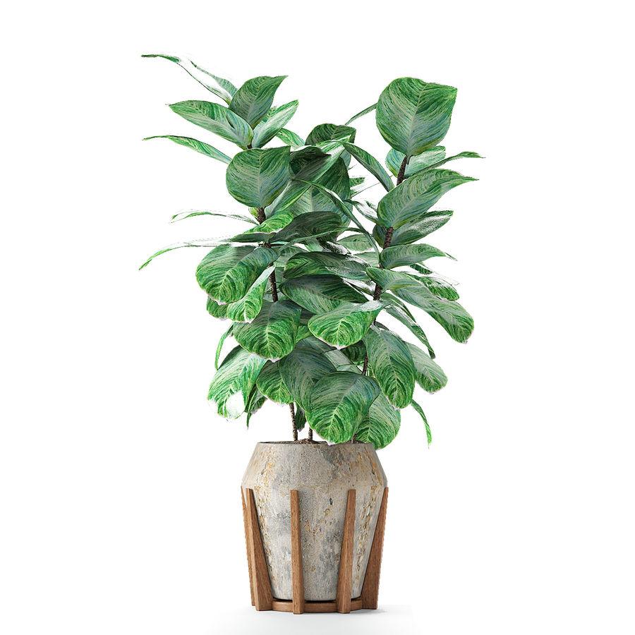 Plant in de exotische plant van de pottenbloempot royalty-free 3d model - Preview no. 5