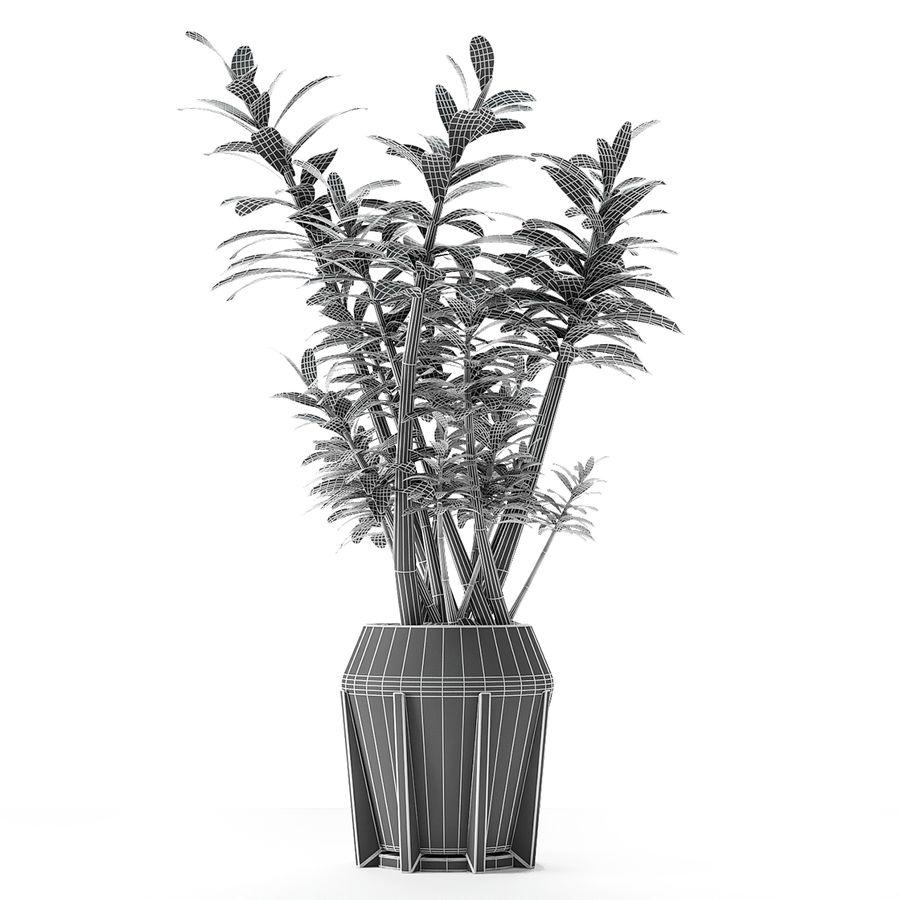 Plant in de exotische plant van de pottenbloempot royalty-free 3d model - Preview no. 10