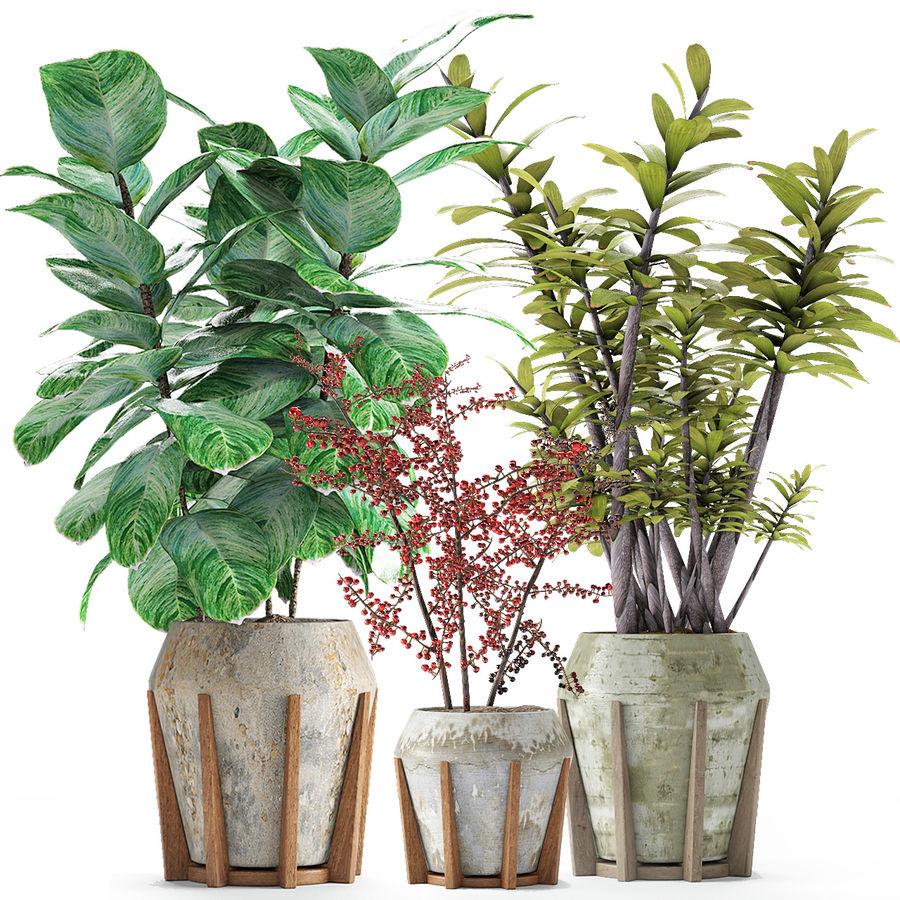 Plant in de exotische plant van de pottenbloempot royalty-free 3d model - Preview no. 2